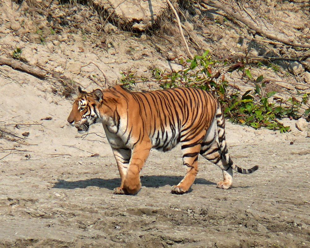 Bardia National Park – 4 Days